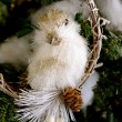 Stock Photo: Bird on Limb Ornament
