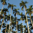 Foto de Stock  : Palm forest