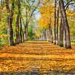 Stock Photo: Nature landscape autumn park
