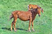 Wild horses — Stok fotoğraf