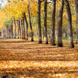 Landscape in autumn park — Stock Photo