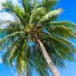 palm  plant blue sky — Foto de Stock