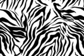 Zebra textured striped — Stock Photo