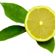 Fruit lemon  leaf — Stock Photo