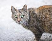 Cat domestic pets — Stock Photo