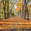 Stock Photo: Landscape in autumn park