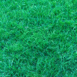Natural short grass background — Stock Photo