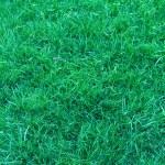 Natural short grass background — Stock Photo