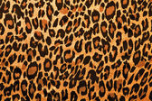 Leopard image fur as background — Stock Photo