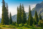 Aspen groves in rocky mountains — Stock Photo