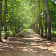 Park allee summer trees — Stock Photo