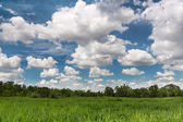 Green field landscape cloudscape — Stock Photo