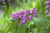Wild flower — Stock Photo