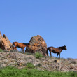 Stock Photo: Horse steppe species Adayev Jabe