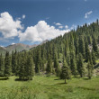 Landscape aspen tree in mountains — Stock Photo