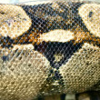 Stock Photo: Snake snakeskin pattern