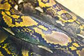 Snake snakeskin pattern — Stock Photo