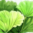 Watercolor painting of green lotus leaves — Stock Photo