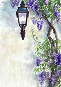 Lilac lantern — Stock Photo