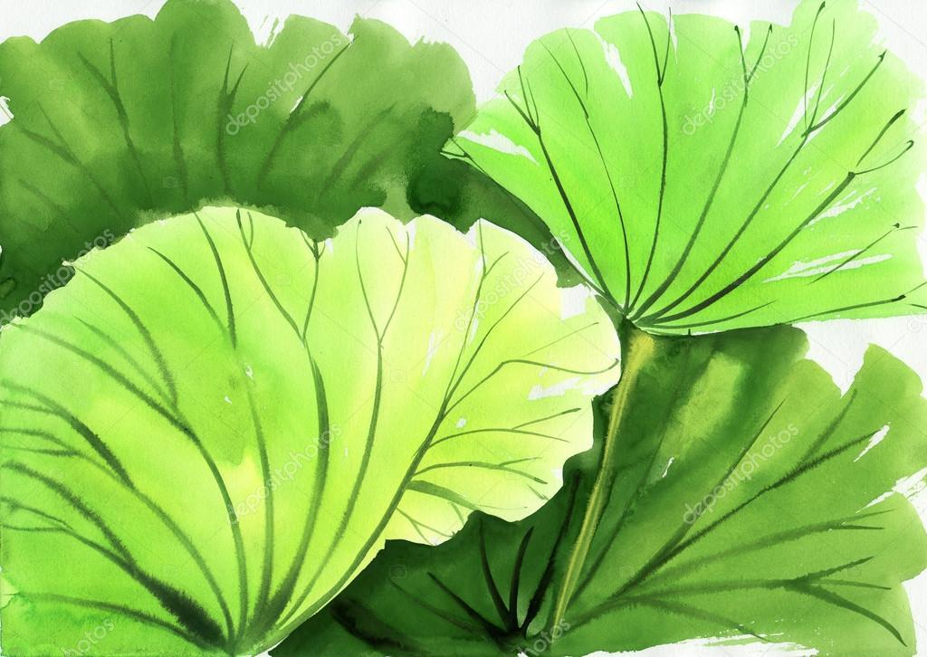 水彩绘画的绿色莲花叶