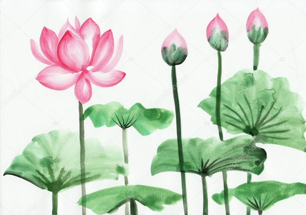 水彩绘画的粉红色莲花 - 图库图片