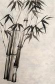 акварельная живопись бамбука — Стоковое фото