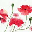 Royalty-Free Stock Photo: Watercolor painting of red poppies