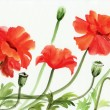 Watercolor painting of red poppies — Stock Photo