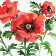 Stock Photo: Watercolor painting of red poppies