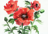 Watercolor painting of red poppies — ストック写真