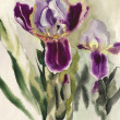 Stock Photo: Irises