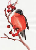 Bullfinch — Stockfoto