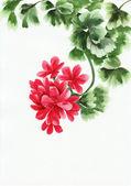 天竺葵träd med röda löv — 图库照片