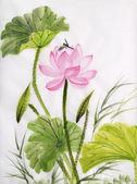 акварельная живопись цветок лотоса — Стоковое фото