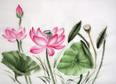 Watercolor painting of pink lotus — Stock Photo