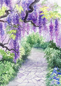 Wisteria blossom — Stock Photo