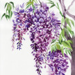 Wisteribranches — Stock Photo #32713169