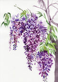 Wisteria branches — Stock Photo