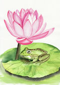 Frog and lotus — Stockfoto