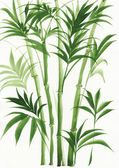 Watercolor painting of palm bamboo — Stock Photo