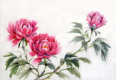 Three peonies — Stock Photo