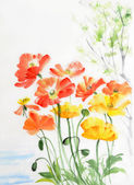 Watercolor painting of red and yellow poppies — Stock Photo