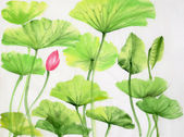 Watercolor painting of lotus leaves and flower — Stock Photo