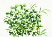 Irish clover — Stock Photo