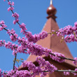 Judas tree branches against red roof — Stock Photo #46048425