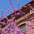 Постер, плакат: Judas tree branches against red building
