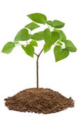 Green sapling of young tree — Stock Photo