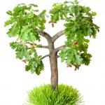 árbol del roble con bellotas — Foto de Stock