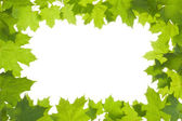 Frame of maple leaves in backlight — Stock Photo
