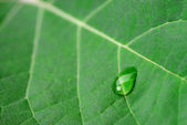 A drop of dew on a leaf — Stock Photo